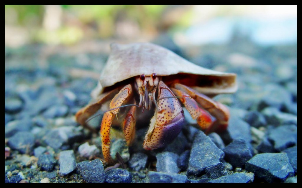 crab on the rocky beach
